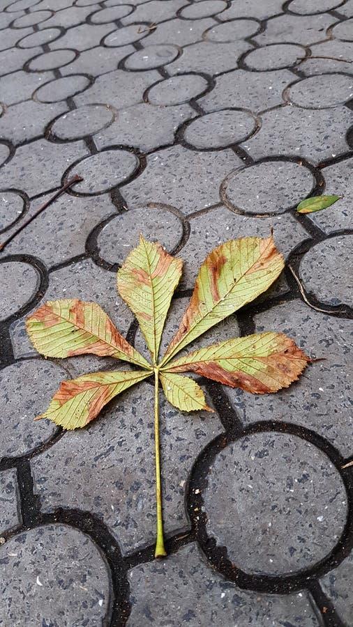栗子在地面瓦片的叶子分支有几何圈子样式的 库存图片