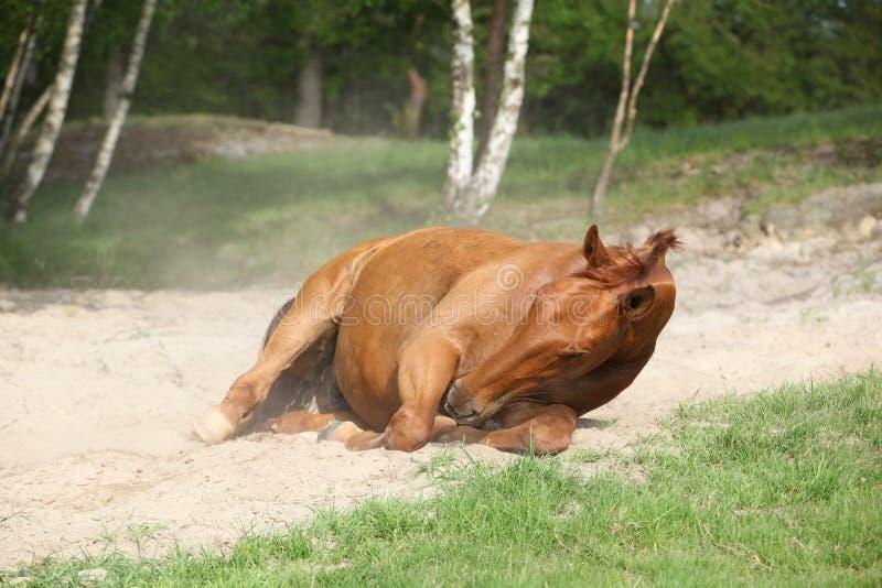 栗子在沙子的马辗压在热的夏天 免版税图库摄影