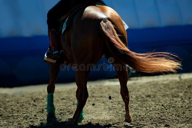 栗子在马鞍下的短距离冲刺的马特写镜头在背后照明 库存照片