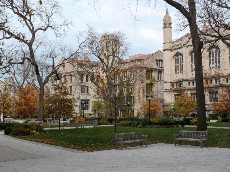 校园芝加哥大学 免版税图库摄影