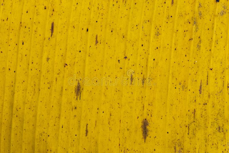 样式和纹理香蕉叶子,五颜六色绿色,黄色和干燥 香蕉叶子纹理摘要背景有选择性的f特写镜头  图库摄影
