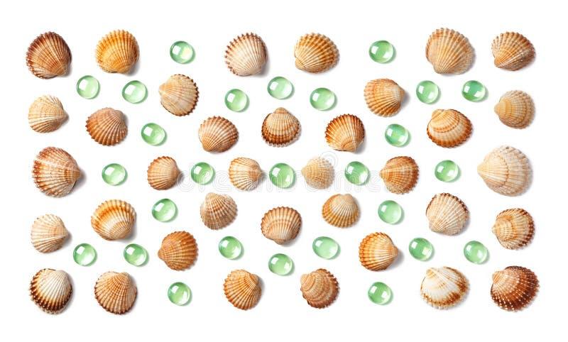 样式由壳和被隔绝的绿色玻璃小卵石制成在白色背景 免版税库存照片