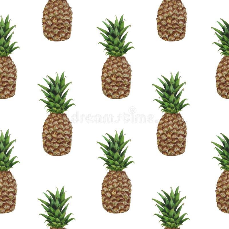 样式菠萝果子水彩例证热带食物数字纸纺织品纹理设置了夏天植物的春天装饰 皇族释放例证
