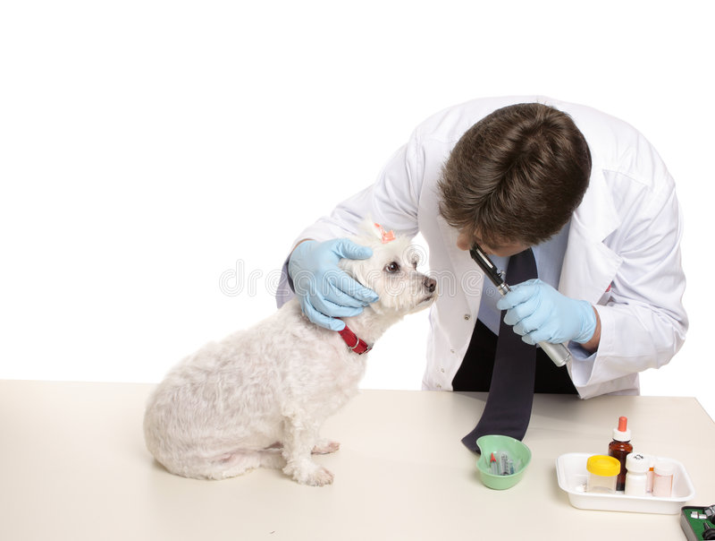 核对兽医 免版税库存照片