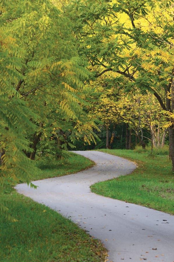核桃树在秋季公园,大详细的垂直的环境美化的秋天道路场面,扭转柏油碎石地面走道,绞的柏油路 免版税图库摄影