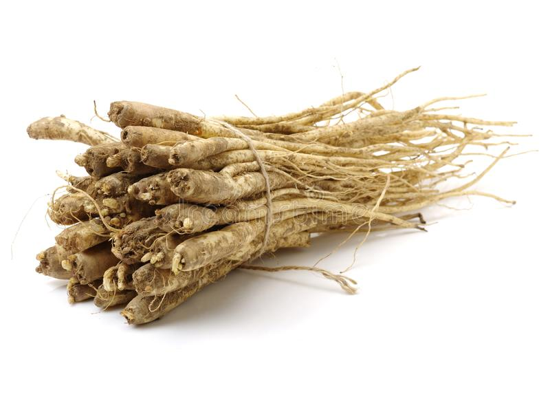 根值platycodi根广泛地使用作为抗发炎在咳嗽和寒冷的治疗 在韩国,植物 库存照片