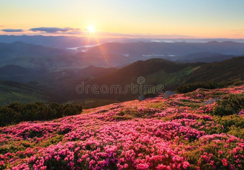 根据日落的令人惊讶的桃红色杜鹃花 与高山的看法,雾,橙色天空 活跃游人的手段地方 免版税图库摄影