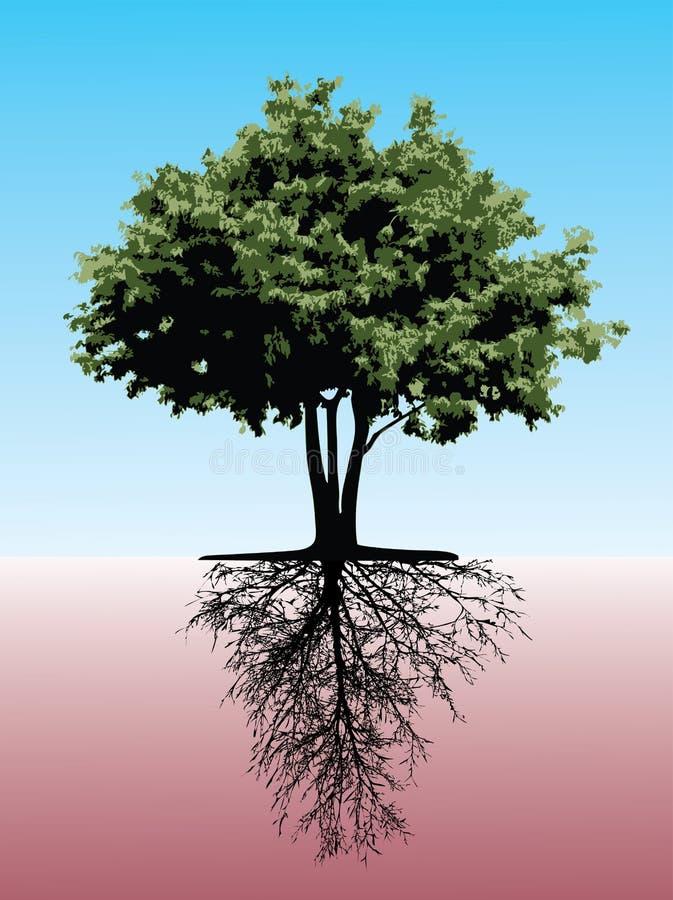 根源结构树 库存例证