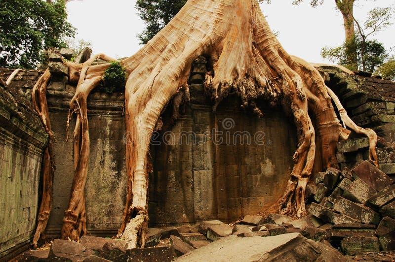 根源结构树 库存照片