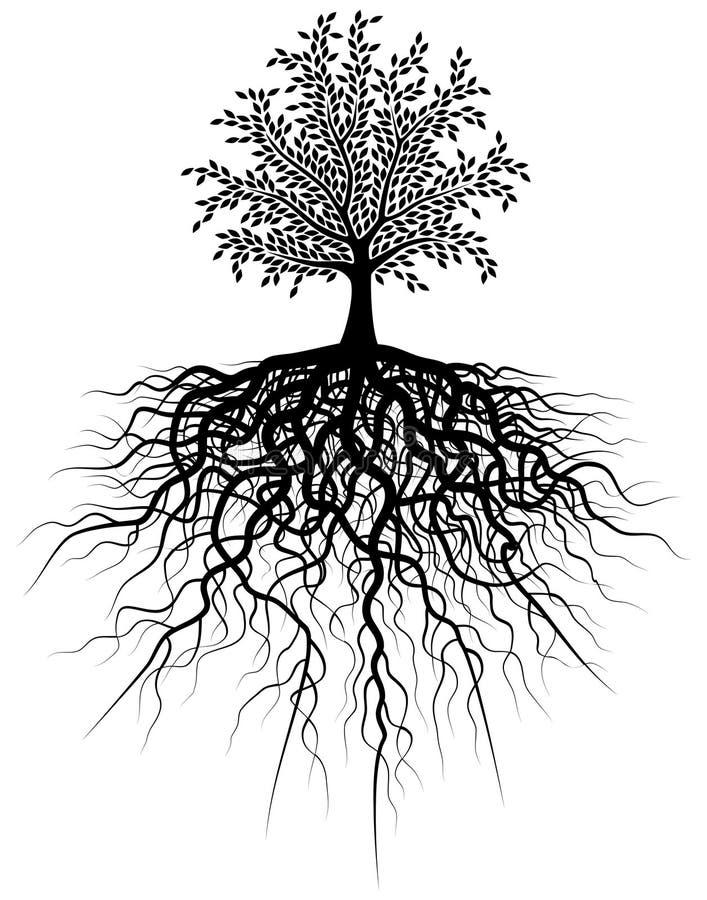 根结构树 向量例证