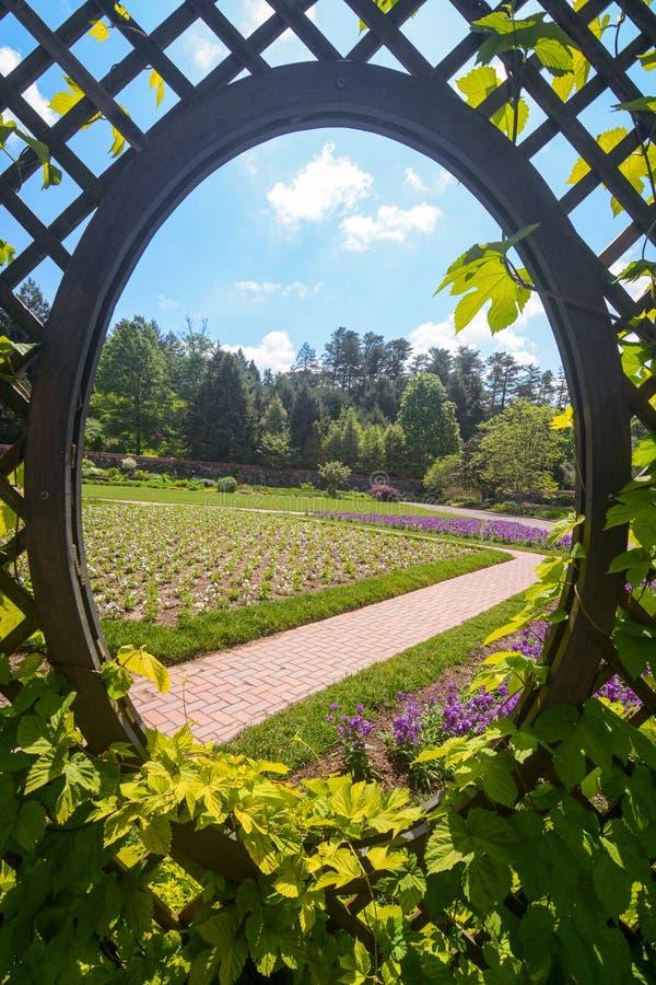 格子形成自然框架背景的树荫处窗口和长得太大的藤 免版税图库摄影