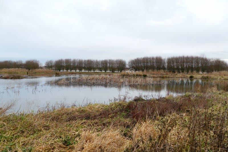 格罗埃内永克尔自然区域,荷兰 库存照片