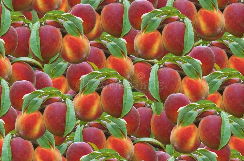 桃子无缝的样式 免版税库存照片