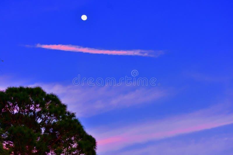 桃红色云彩线在天空的 库存照片