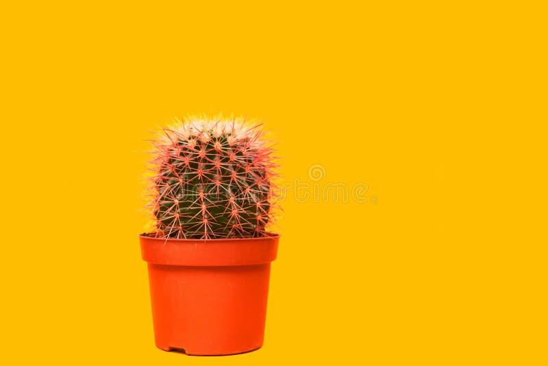桃红色仙人掌 美术画廊时尚设计 最小的Stillife 在黄色背景的概念 库存图片