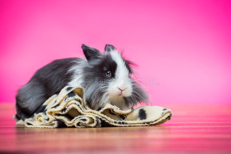 桃红色兔宝宝在演播室 免版税库存图片