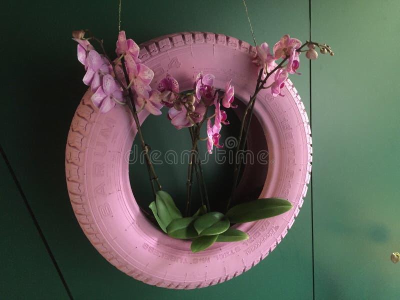 桃红色兰花装饰 库存照片