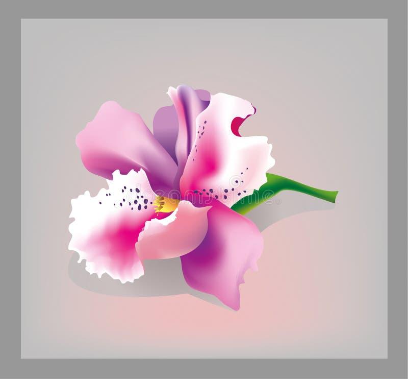 桃红色兰花 库存照片