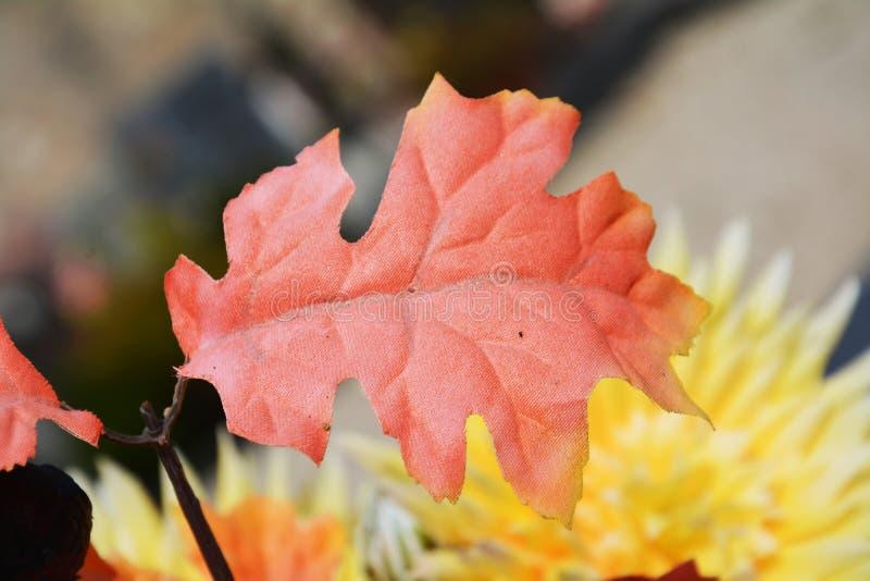 桃红色叶子 库存照片