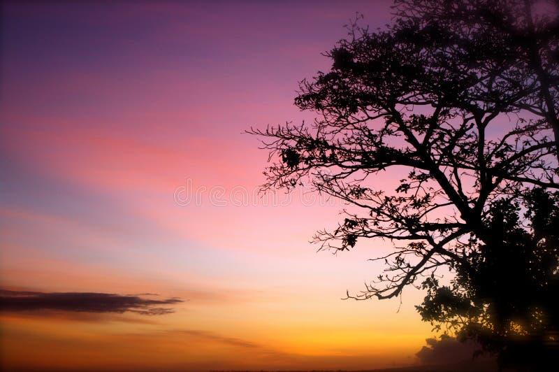 桃红色和橙色热带日落 免版税图库摄影