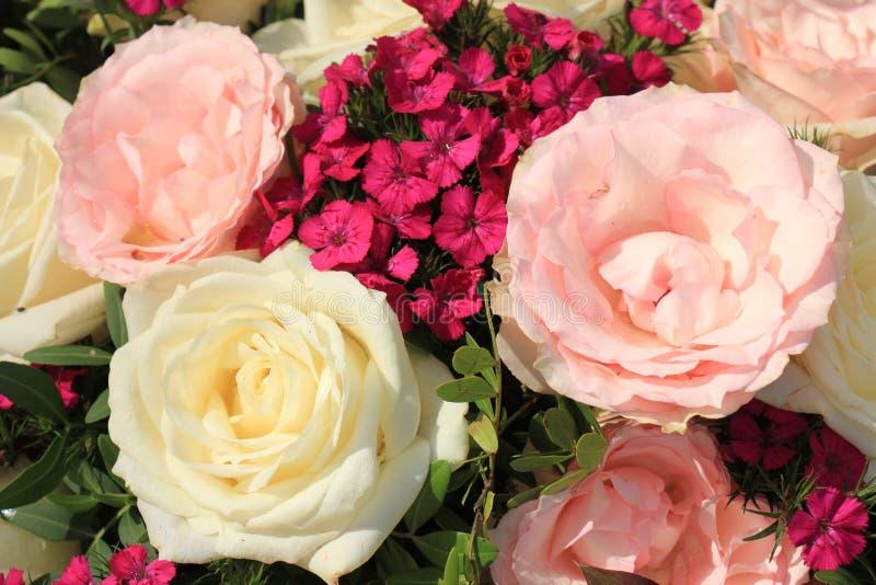 桃红色和白玫瑰 库存图片