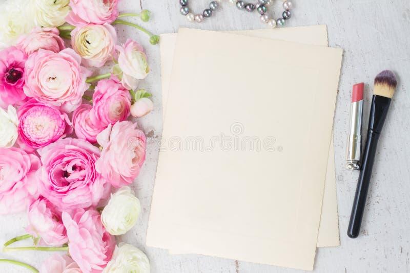 桃红色和白色毛茛属花 库存照片