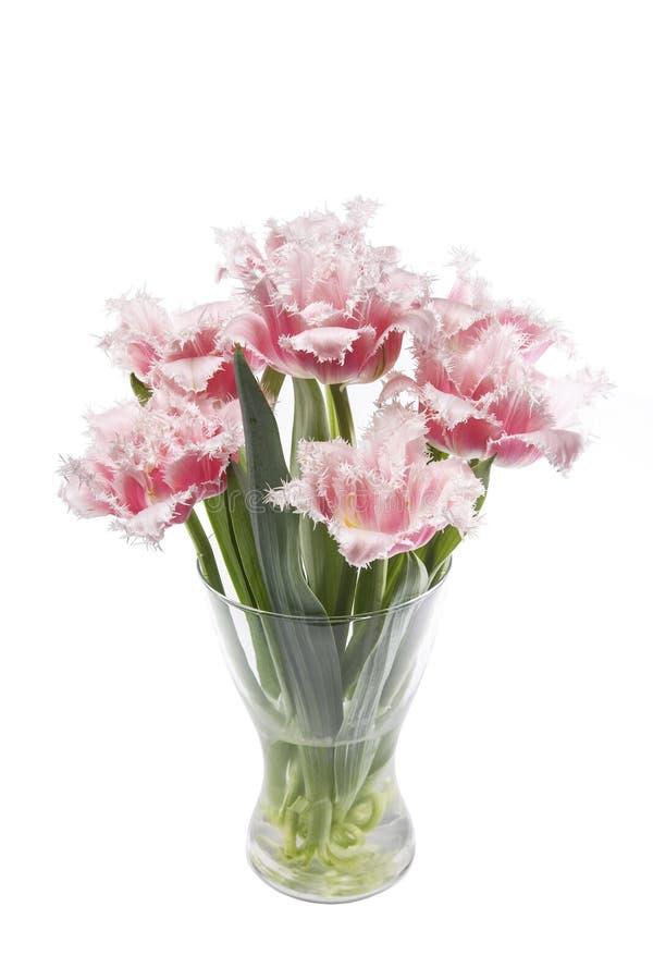 桃红色和白色郁金香花束在玻璃花瓶的在白色背景 免版税库存图片