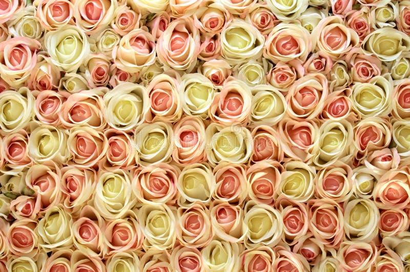 桃红色和空白玫瑰背景。 免版税图库摄影