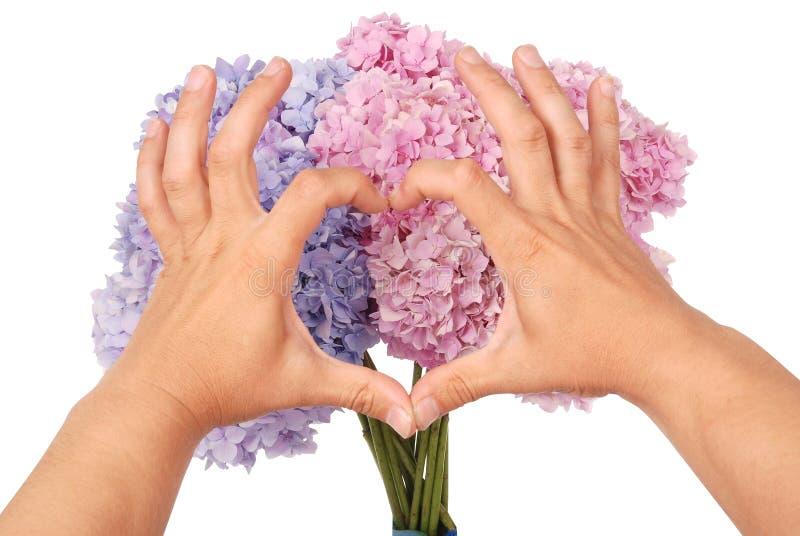 桃红色和蓝色花八仙花属在手上 两只手以hea的形式 免版税库存图片