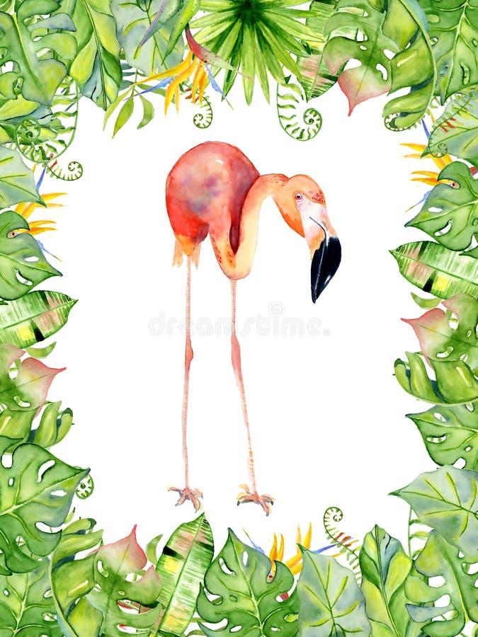 桃红色在安排的火鸟水彩手拉的例证与绿色热带植物、异乎寻常的monstera和香蕉生叶 向量例证