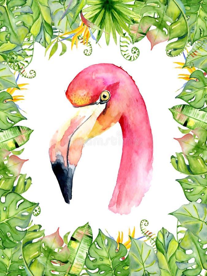 桃红色在安排的火鸟水彩手拉的例证与绿色热带植物、异乎寻常的monstera和香蕉生叶 皇族释放例证