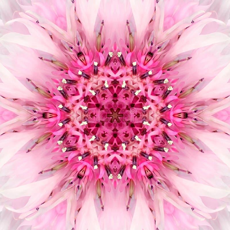 桃红色坛场花中心 同心万花筒设计 库存图片