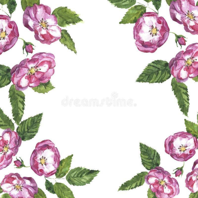 桃红色夏天玫瑰和叶子花背景 手拉的水彩例证 向量例证