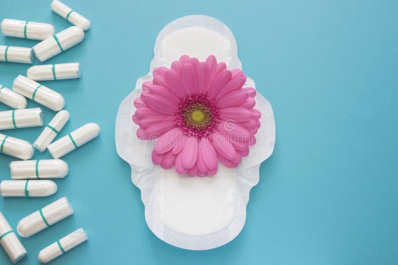 桃红色大丁草雏菊花和每日月经垫和棉塞 妇女卫生学构想照片 woma的软的嫩保护 库存图片