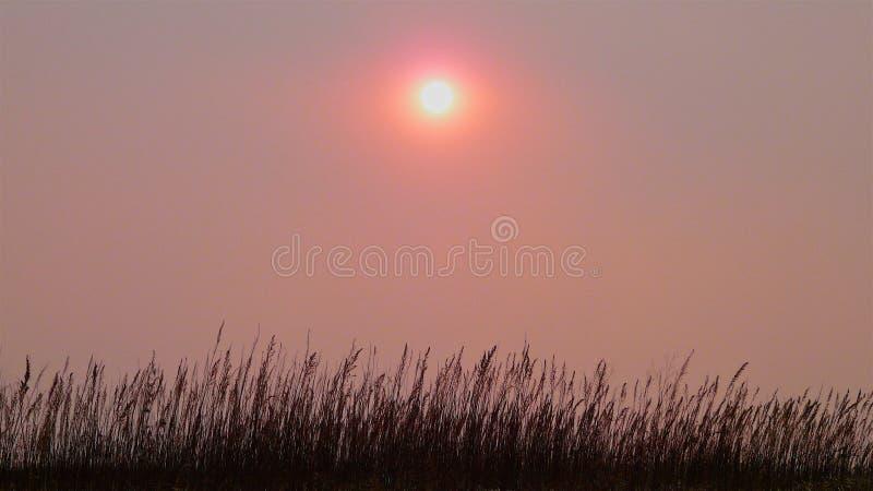 桃红色天空和太阳的全景在雾在干燥秋天草上 库存图片
