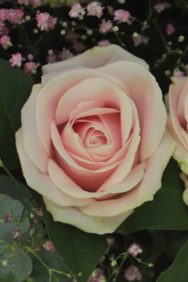 桃红色婚姻的玫瑰 库存图片