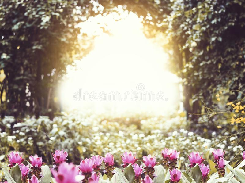 桃红色小花在日落的公园 免版税图库摄影