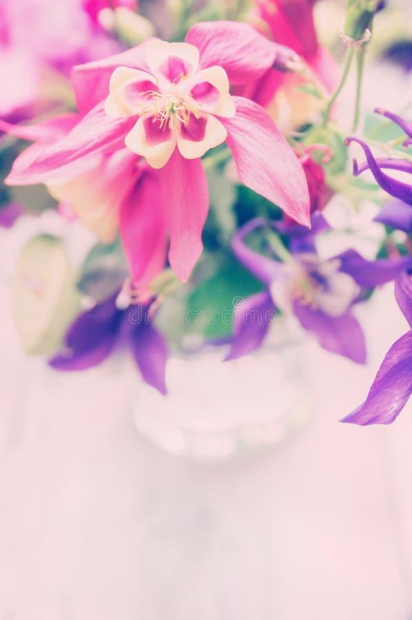 桃红色庭院在玻璃,浪漫卡片开花 免版税库存图片