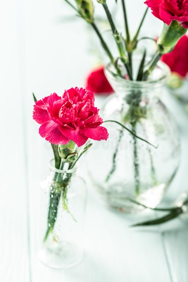 桃红色康乃馨花束在轻的绿松石木背景的 免版税库存照片