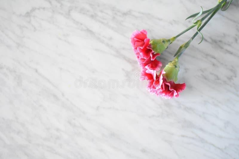 桃红色康乃馨花束 免版税库存图片