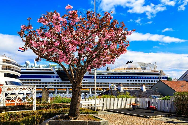 桃红色开花树和船在口岸 库存照片