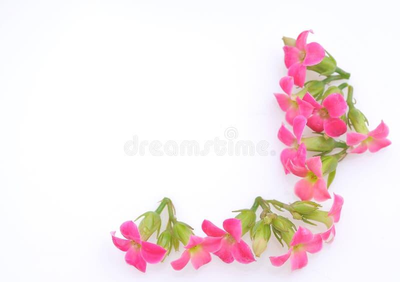 桃红色开花边界 库存照片