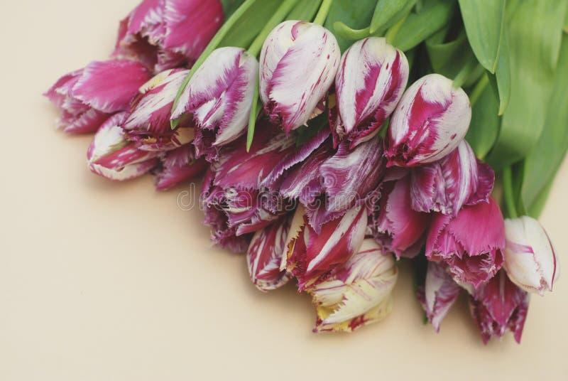 桃红色春天郁金香花在黑暗的背景的Boquet Isoalted与拷贝浆糊 新鲜的美丽的花 免版税库存图片