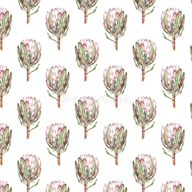桃红色普罗梯亚木花水彩例证 在白色背景的无缝的样式设计 皇族释放例证