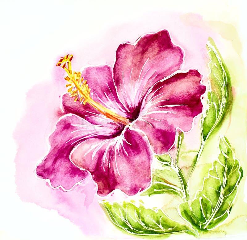 桃红色木槿,水彩绘画。 皇族释放例证