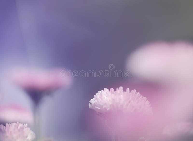 桃红色柔光自然背景 免版税库存照片
