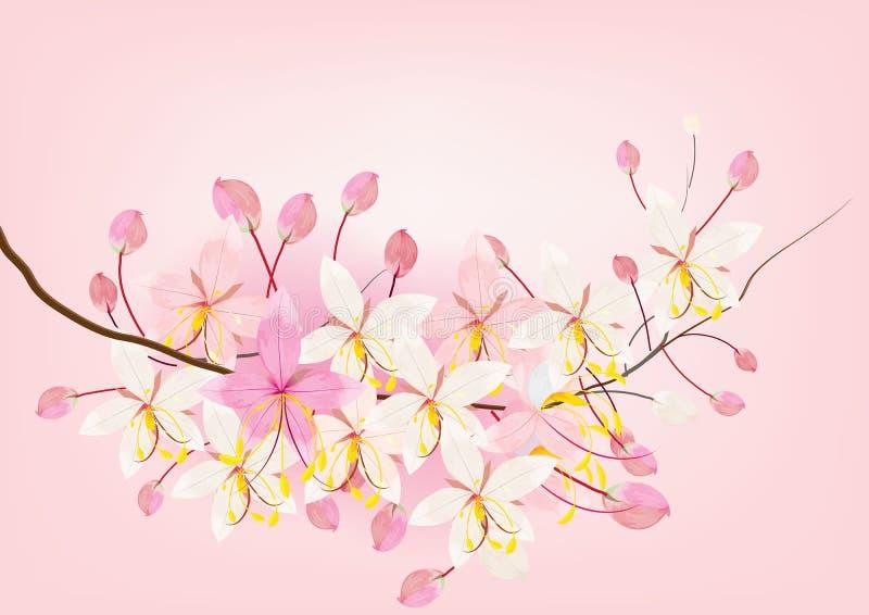 桃红色桂皮或祝愿在白色背景,传染媒介例证的树花 向量例证