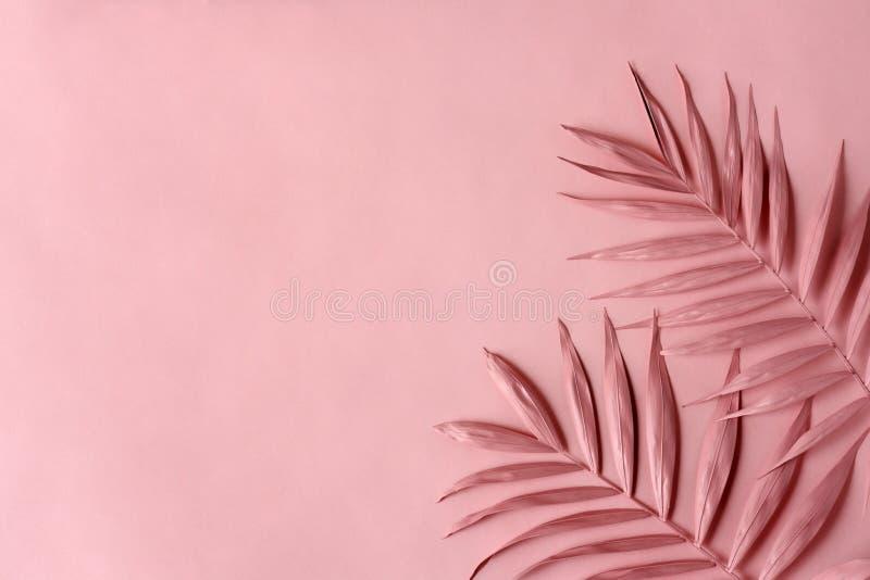 桃红色棕榈叶 免版税库存图片