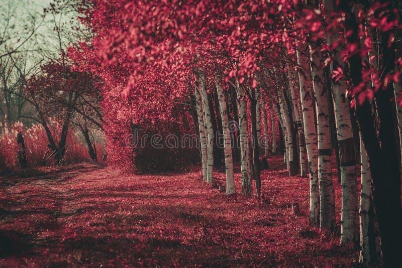 桃红色森林 库存照片