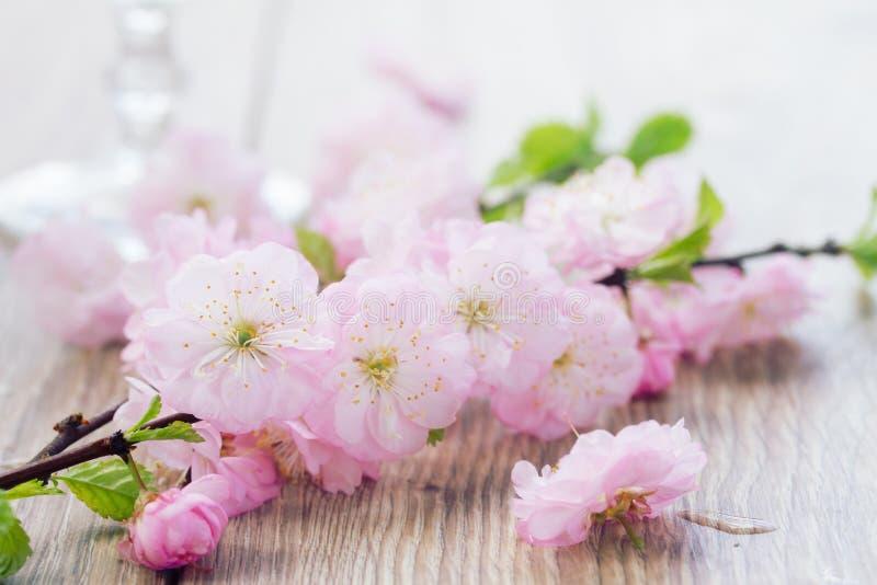 桃红色樱桃花的枝杈 免版税库存照片